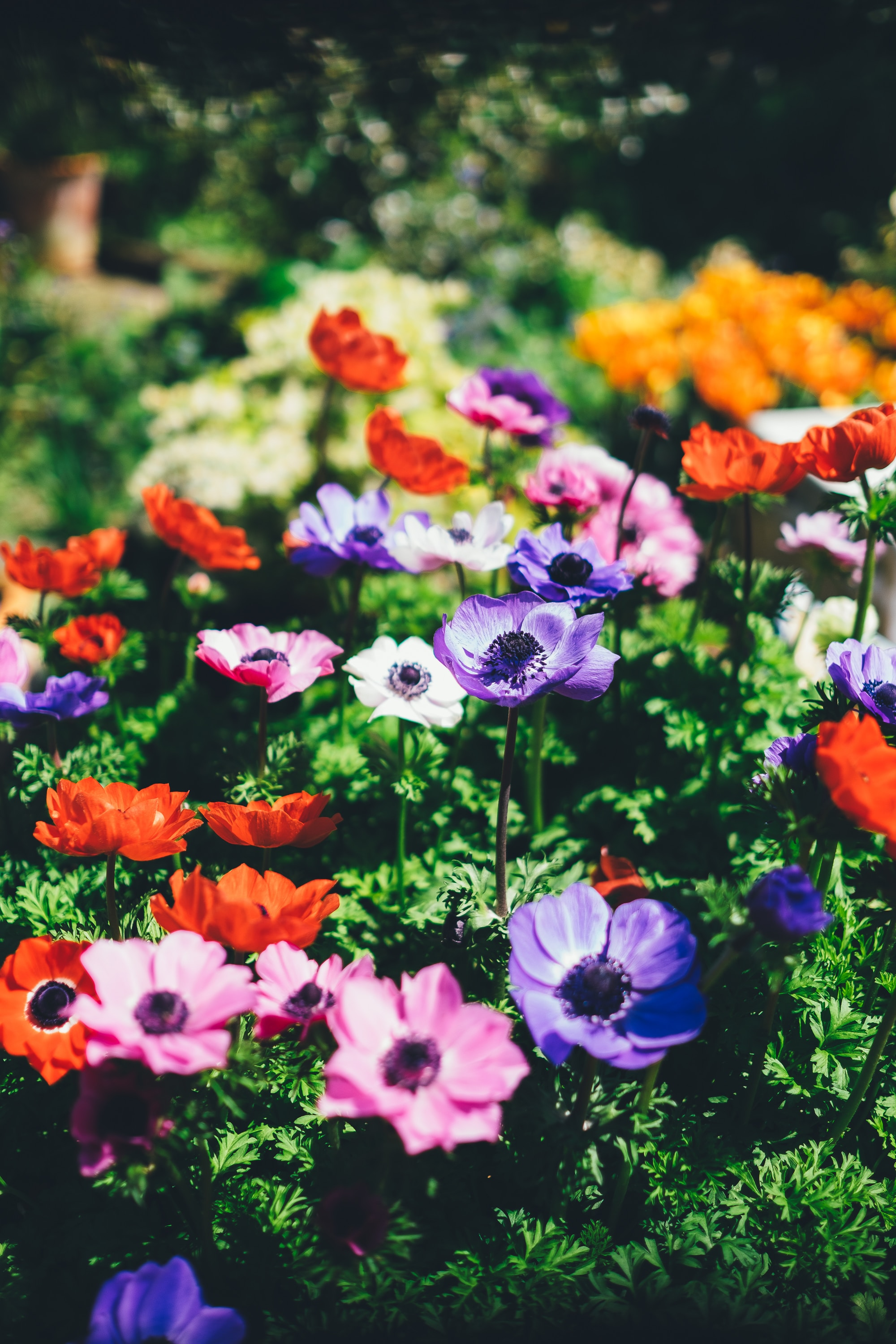 Chasing happiness in gardens